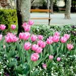 Patrimoine végétal et floral
