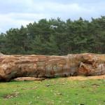 Abattage d'arbre sur demande.