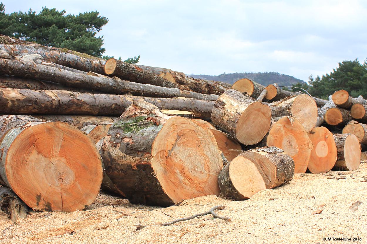 Hetre bois de chauffage - Stocker le bois de chauffage ...