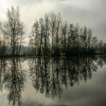 Jeux de reflets sur les étangs de Bas-en-Basset