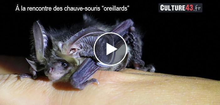 À la rencontre des oreillards avec Chauve-Souris Auvergne