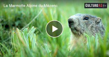 La Marmotte du Mézenc en Haute-Loire